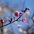 Photos: 蝶の羽重
