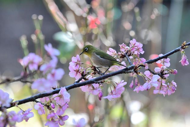 Photos: 花選び