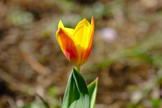 3月10日開花