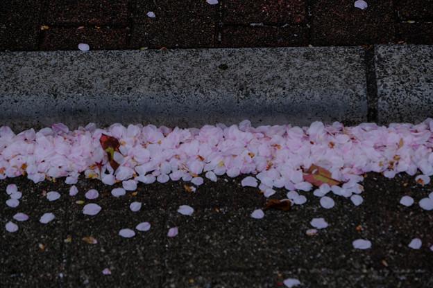 花びらの吹き溜まり