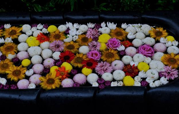 お寺の花手水
