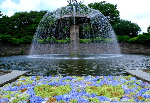 紫陽花フローティングと噴水