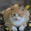 Photos: 猫のヒゲ