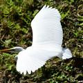 Photos: 飛ぶ