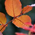 葉をふちどる