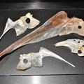 魚のサカナ、鯛、ブリ、鮭