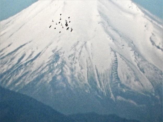 富士山、渡り鳥