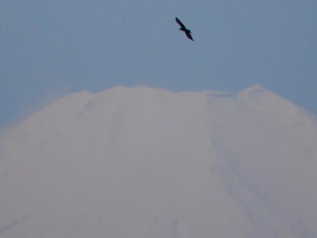 富士山・野鳥