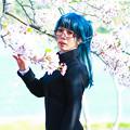 Photos: 潮桜