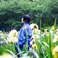 Photos: 雨菖蒲