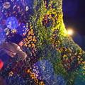 Photos: 夜園の宴