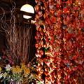 Photos: 吊るし飾り