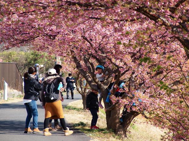 みんなで木登り桜のぼり