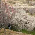 春を感じる梅の里