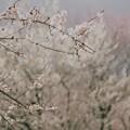 春を告げる梅の里