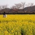 Photos: 菜の花畑の仲良し女子