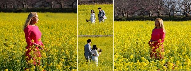 幸せの黄色い菜の花畑