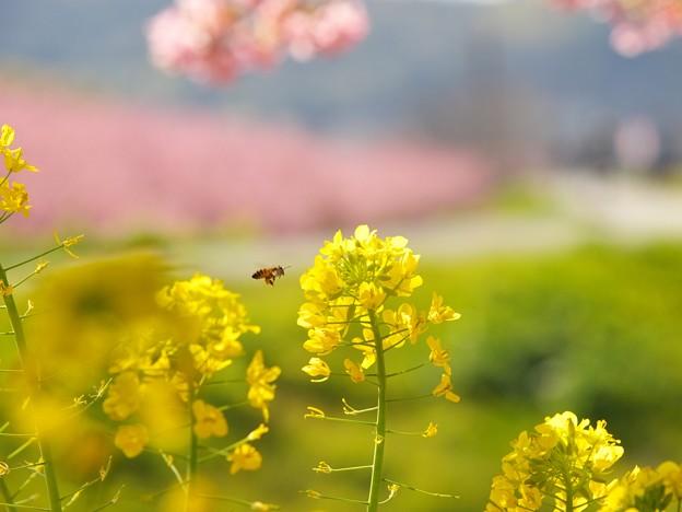 ブンブンブン蜂が飛ぶ♪