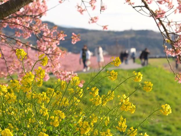 春爛漫な午後を愛でる人たち