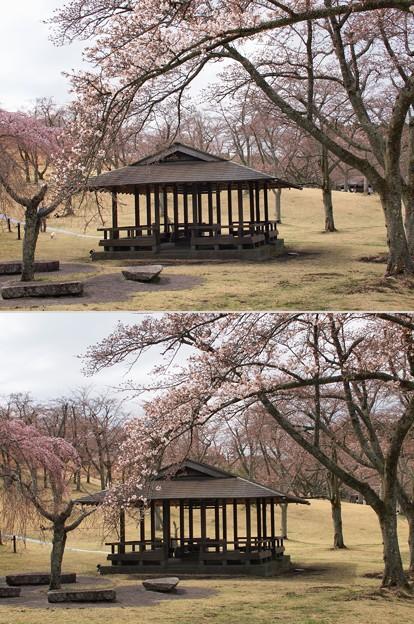 東屋と咲き始め桜