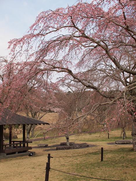 日本の春~うっすら青空と