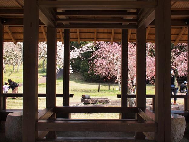 柱間から垣間見る春模様