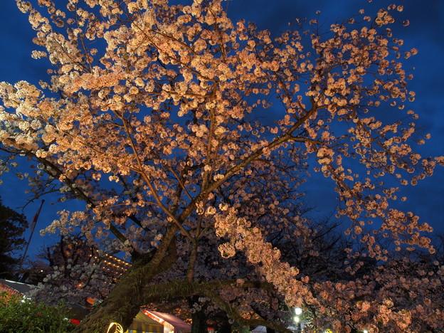 仰げば夜桜