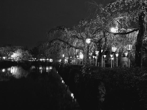 古の夜桜画…