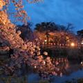 Photos: 神池に映える夜桜