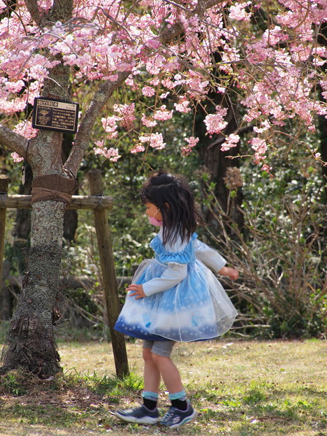 桜の樹の下で♪