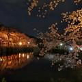 夜の静寂の大島桜