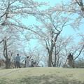 それぞれの春