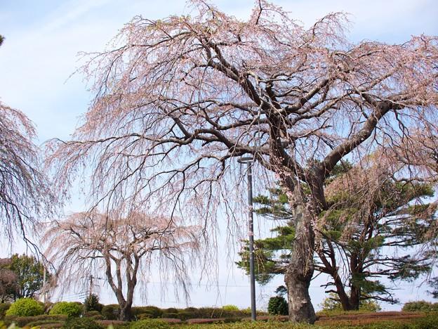 小室山公園の春