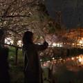 夜桜、撮る人