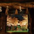 門の向こう側(コロナ渦の夜桜)
