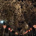 春の夜の参道
