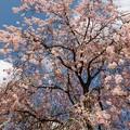 春の青空、春の旬