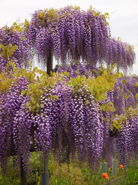春の甘い香り