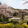 瑞泉郷を彩る春の色