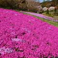 Photos: 春を彩る