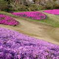 Photos: 春に彩り輪になって