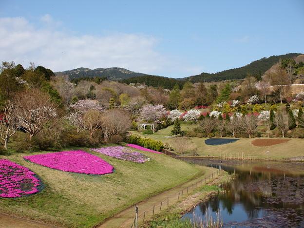瑞泉郷は春景色