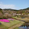 Photos: 瑞泉郷は春景色