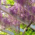 春の甘~い香り
