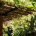 Photos: 水の苑緑地の春