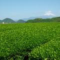 Photos: 茶畑越しのお山は…