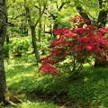 新緑の中に咲く