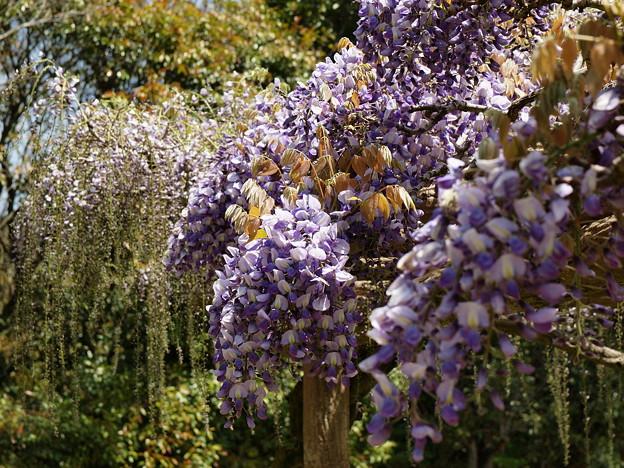 城址に漂う春の香り