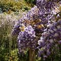 Photos: 城址に漂う春の香り