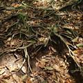木漏れ陽と地を這う根